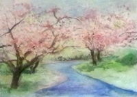 springtime_cherry_blossoms22x28_watercolor.jpg